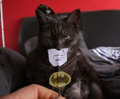 http://bucket.imustbuild.com/files/batmancat.jpg