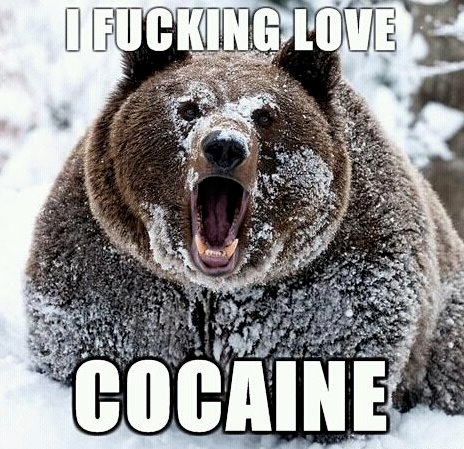 http://bucket.imustbuild.com/files/bear-cocaine.png