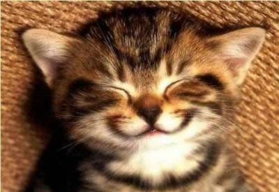 http://bucket.imustbuild.com/files/kitten-smile.jpg