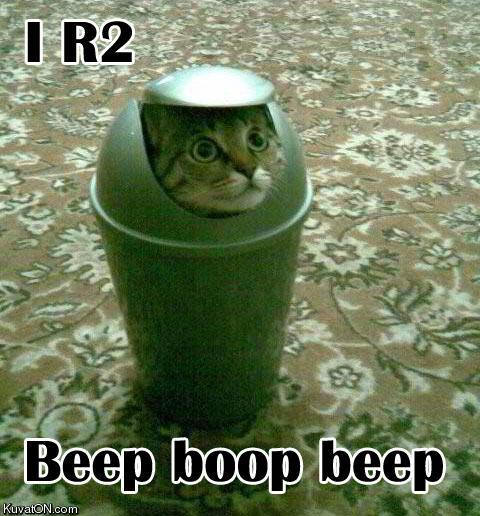 http://bucket.imustbuild.com/files/r2d2_cat.jpg