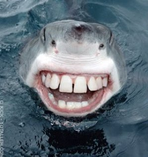 http://bucket.imustbuild.com/files/shark-smile.jpg